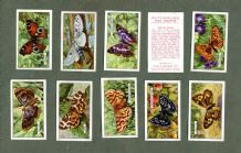 Collectible Tobacco cigarette cards set Butterflies and Moths 1938